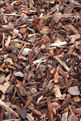 shredded bark/wood chips