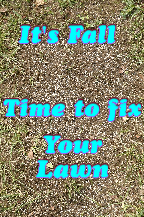 Its fall time to fix your lawn!