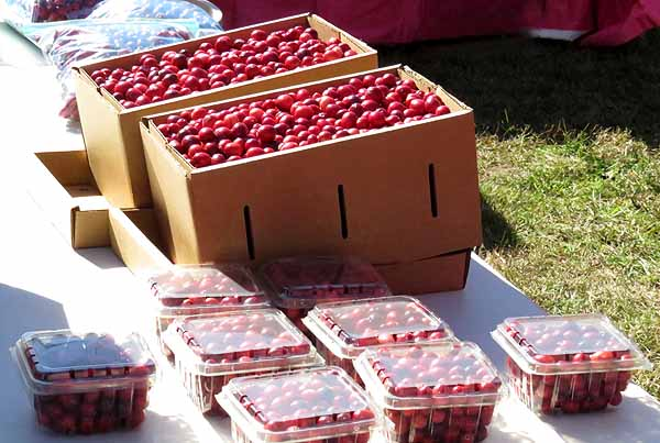 Fresh cranberries on sale
