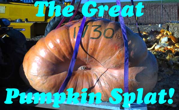 Giant pumpkin in sling