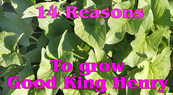 14 REASONS TO GROW GOOD KING HENRY.