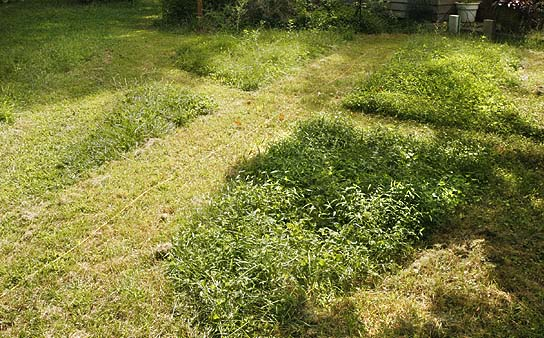 Geometric patterns in our lawn. These were accidental cuts from necessity not art. But someday when I have time&.