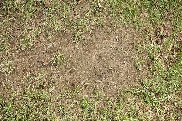 lawn patch, remove all unwanted material and weeds.