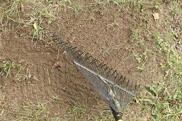 lawn fixing, rake soil