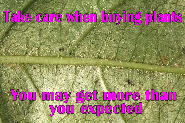 Take Care When Buying Plants