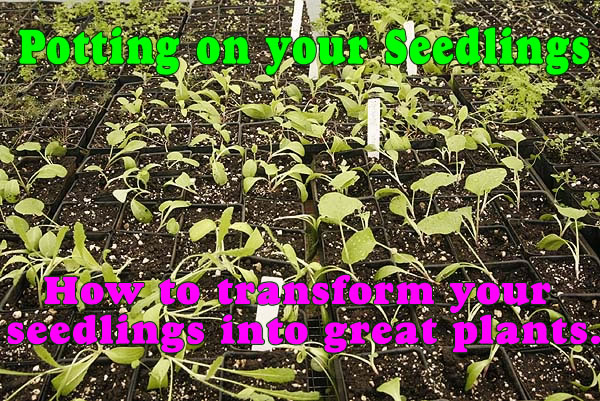 potted_on_seedlings_words