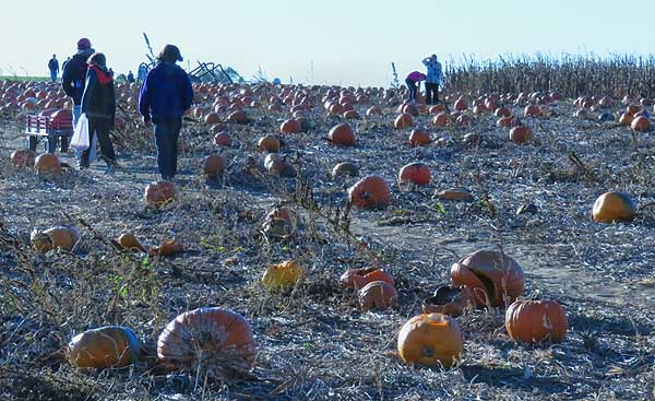 Pumpkin field, pick one and get the crew to splat it.