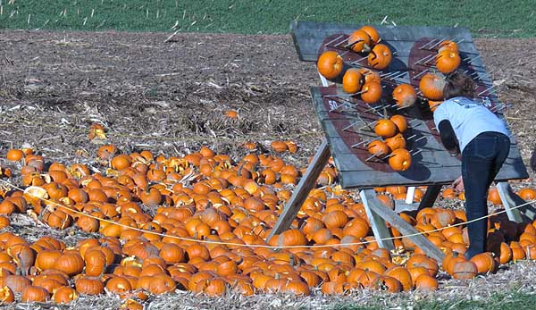 Pumpkins thrown at nail board, see if you can make it stick.