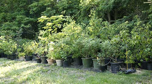 line of potted trees and shrubs