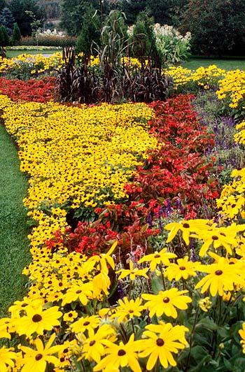 Bright annual border gives huge color impact but needs to be planted every year