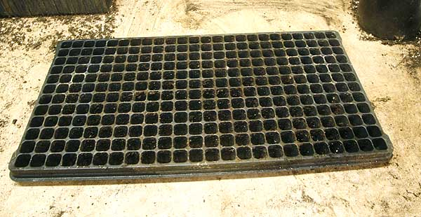 Small cell plug tray. This tray has 288 cells. Used for small to small-medium seeds.