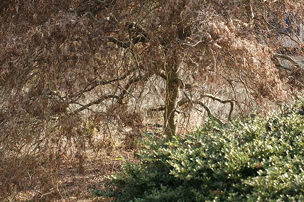 Water Your Shrubs Before Winter Sets In.