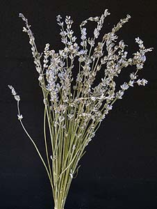 /graphics/Dried_flowers/lavenderL_main.jpg