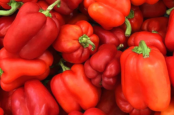 Peppers  Sweet Red Bell Capsicum annuuma