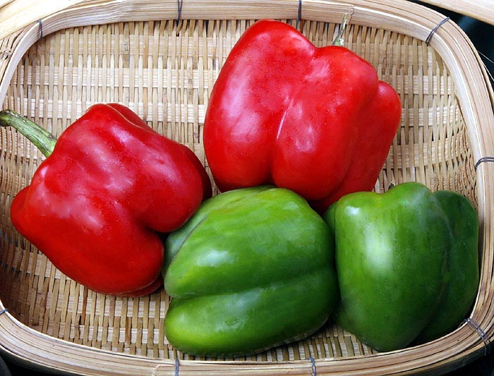 Peppers  Sweet Red Bell Capsicum annuum