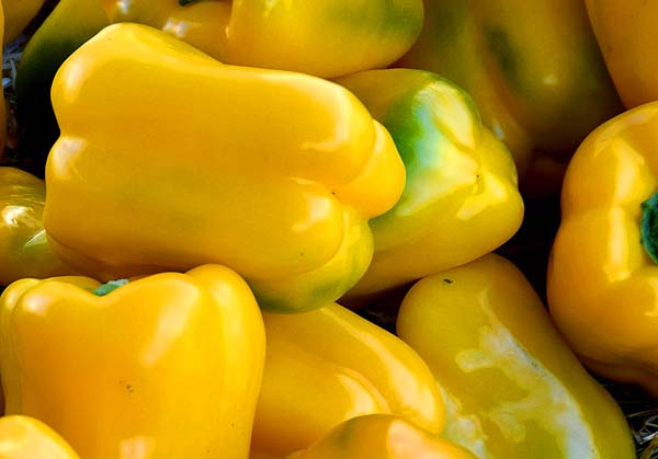 Peppers, Sweet Yellow Bell Capsicum annuum