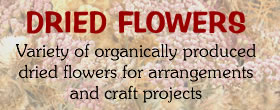 Dried flowers, all organic
